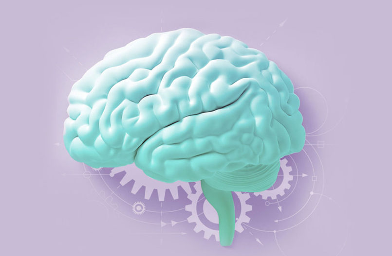 main functions of Acetylcholine